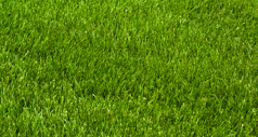 Lawn Mowing Service - Springfield, MO