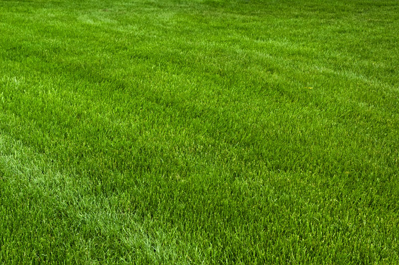 A Few Tips To Achieve Your Dream Lawn